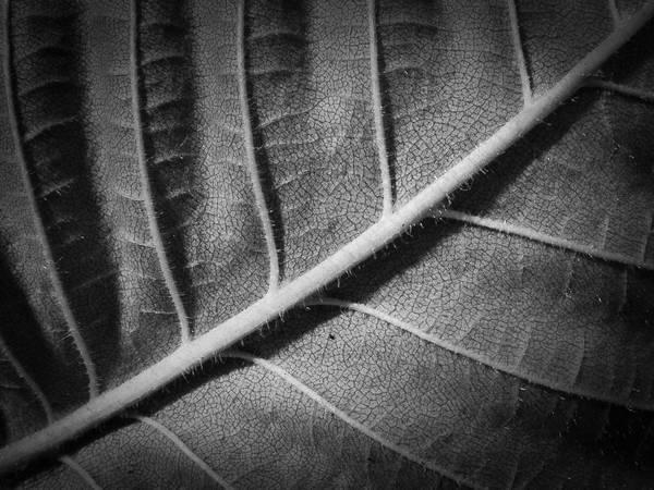 Leaf MKIV