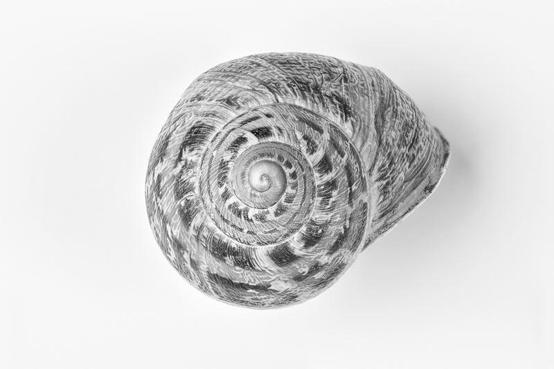 Snail Shell 2
