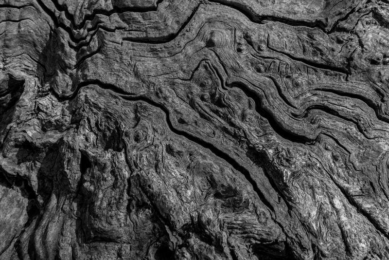 Tree Detail 5
