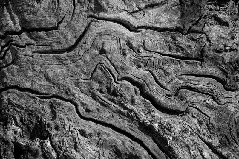 Tree Detail 4