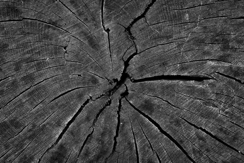 Tree Detail 3